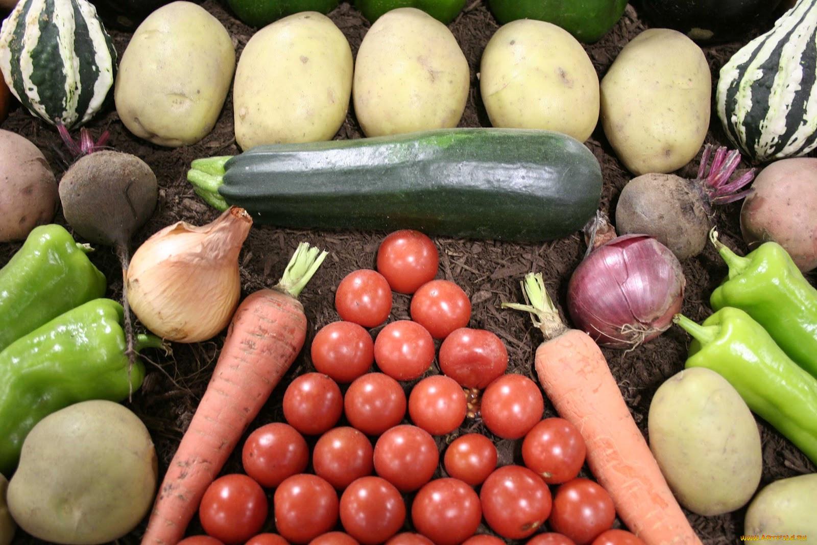 прибалтийских картинки огурец и картофель несколько основных техник